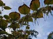 botaniskhave_0230