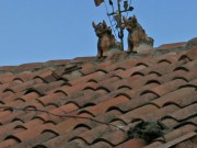 These weird creatures sit on almost all roofs in Cuzco - Many with a big cross