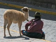 Woman and llama