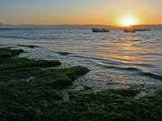 Seaweed at sunset