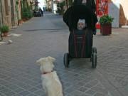 Amazed by dog